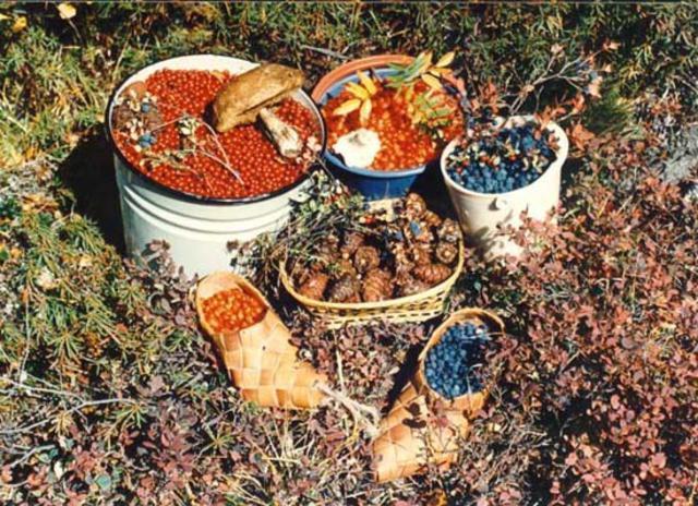 Дары природы Магадана