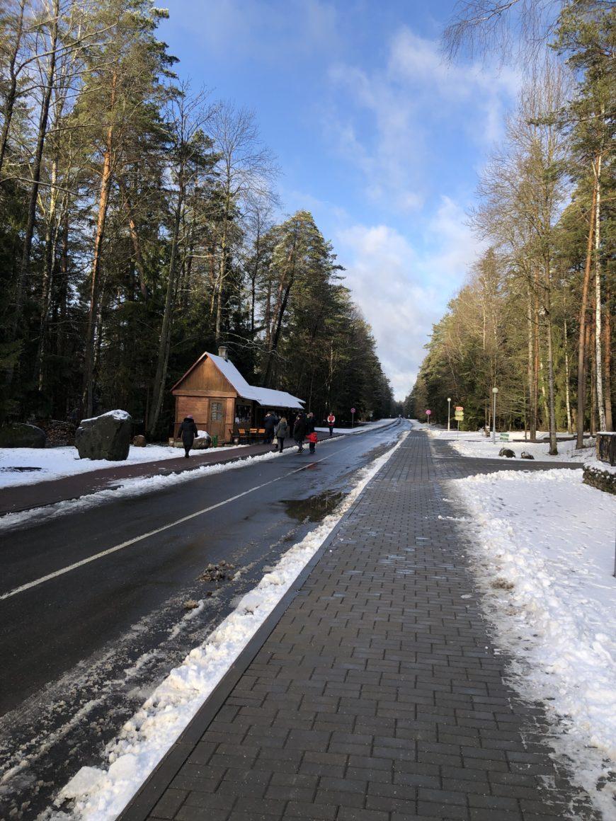 Зимняя Беловежская пуща