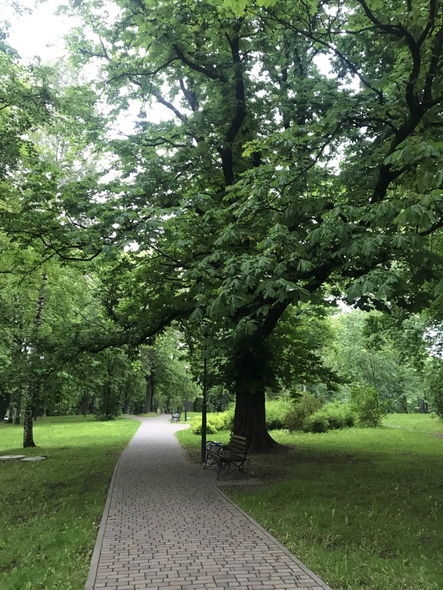 Парк в Калининграде