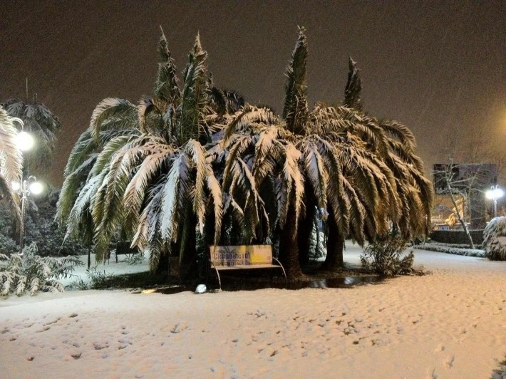 Сочи. Снег на пальмах