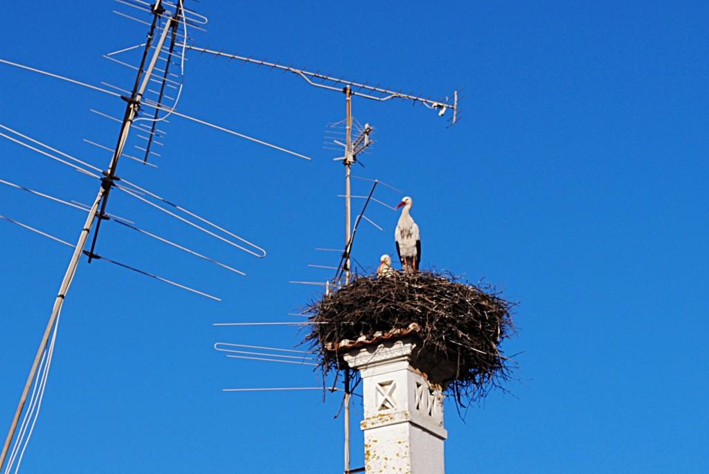 Аисты – такие же обычные птицы для Каштелу Бранку, как и голуби