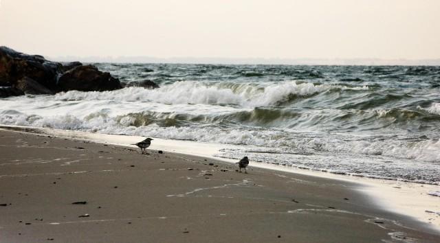 Бердский залив