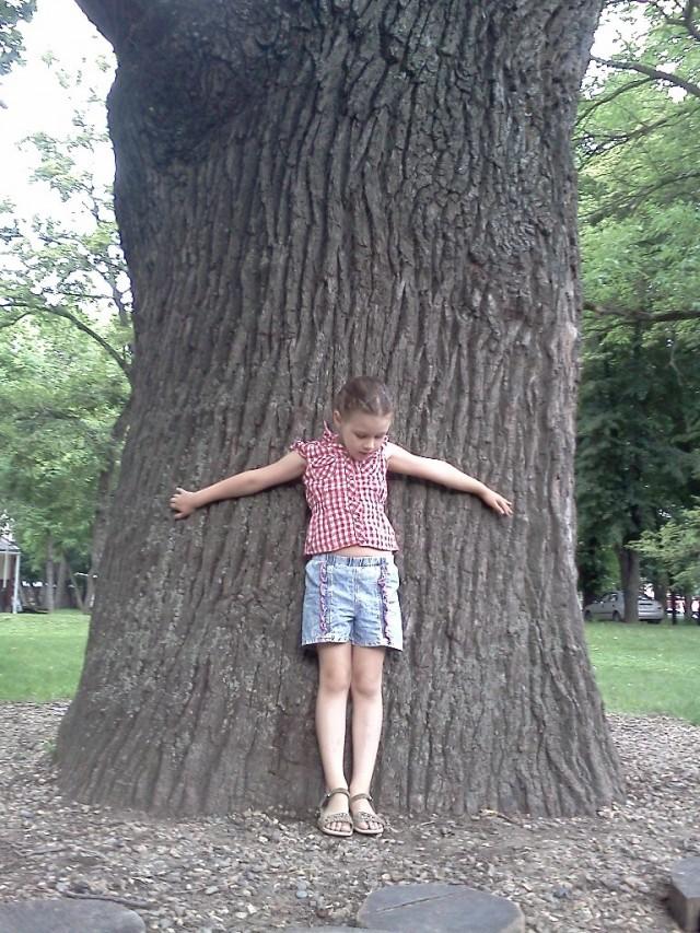 Многовековые деревья - достопримечательность городского сада