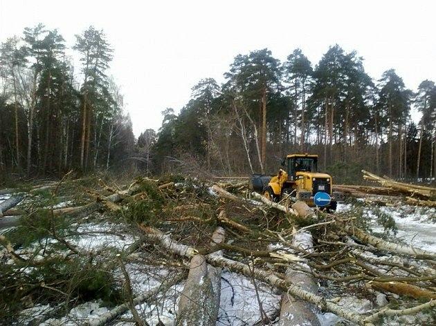 Вырубка Цаговского леса