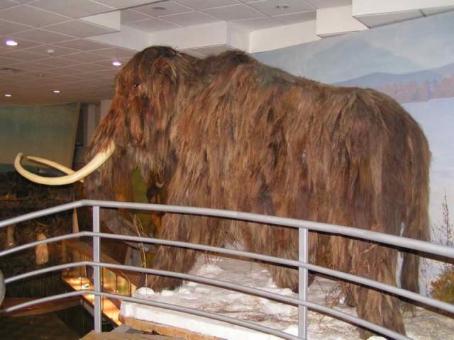 Чучело мамонта из якутского музея мамонта