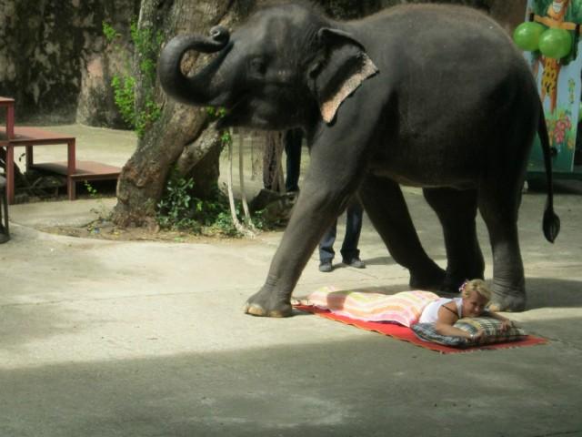 Слон - самое почитаемое в Таиланде животное. Для них даже предусмотрена государственная пенсия