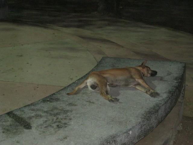 В буддистском Таиланде даже животные спят в таких непринужденных позах