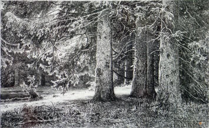 Картина Шишкина «Ели...»