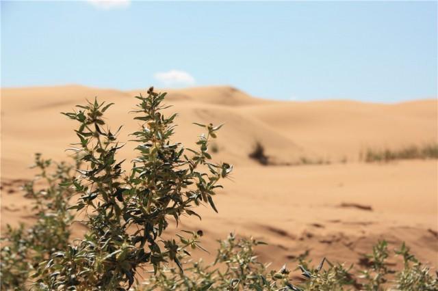 Пустыни Калмыкии