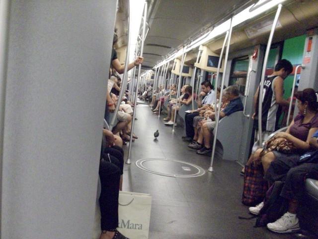 Незваный гость в вагоне миланского метро