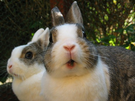 Милые кролики чуть не уничтожили сельское хозяйство Австралии