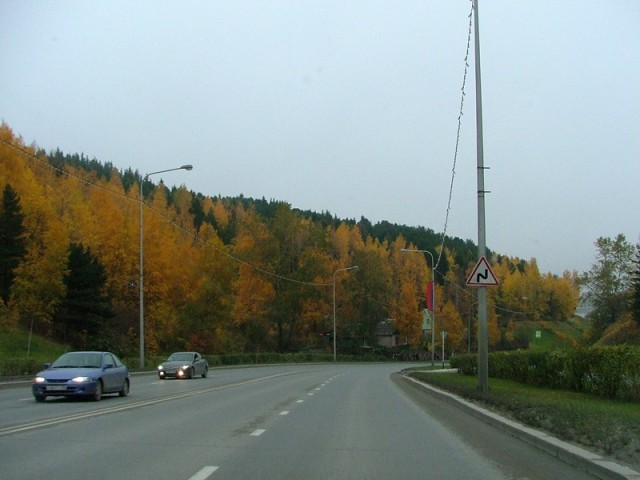 Улица Гагарина прорезает хорошо сохранившийся таежный массив Самаровской горы