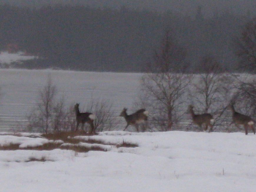 Эмиграция в Швецию - это возможность любоваться природой