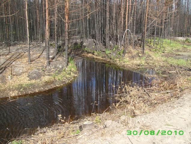 Горелый лес