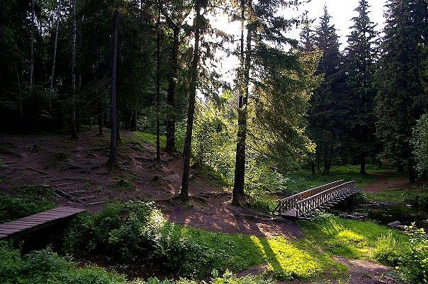Городской лесопарк Зеленограда – более 100 га леса!