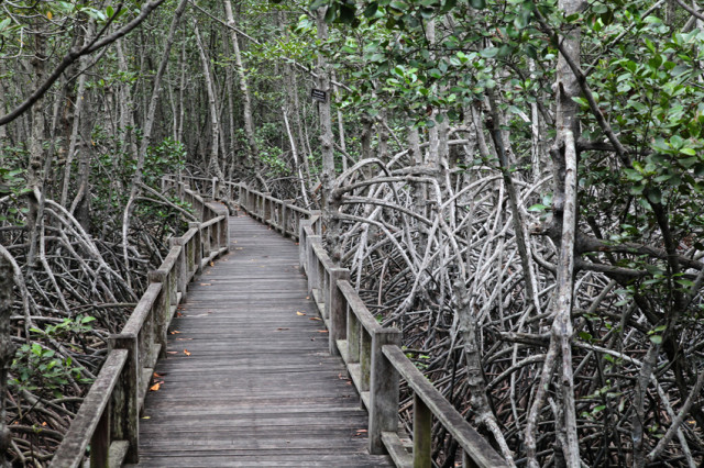 Вокруг Хуахина растут мангровые леса. Выглядят они, как на этой картинке. Поэтому, если не хотите, чтобы вас забрала Баба Яга – не езжайте туда
