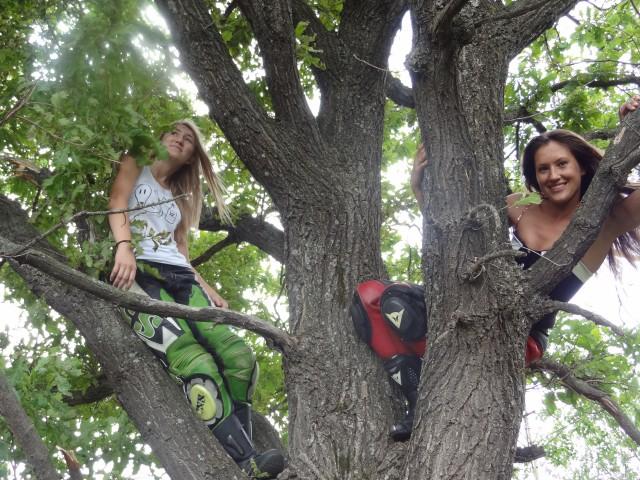 Древний дуб. Так желания загадывать удобнее