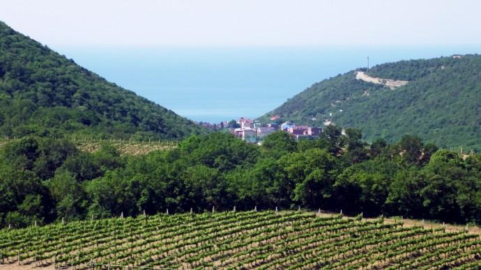 Море и виноградники – два сокровища Краснодарского края
