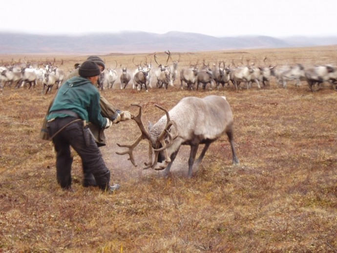 Чукчи – коренное население Чукотки