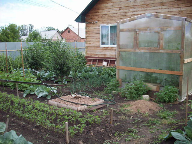 Часть огорода, дом