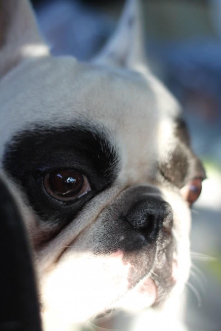 Наш верный пёс