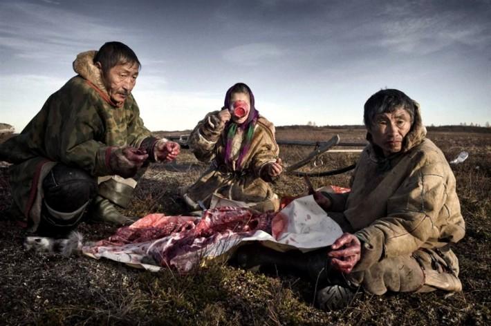 Сырое оленье мясо — обычная еда ненцев