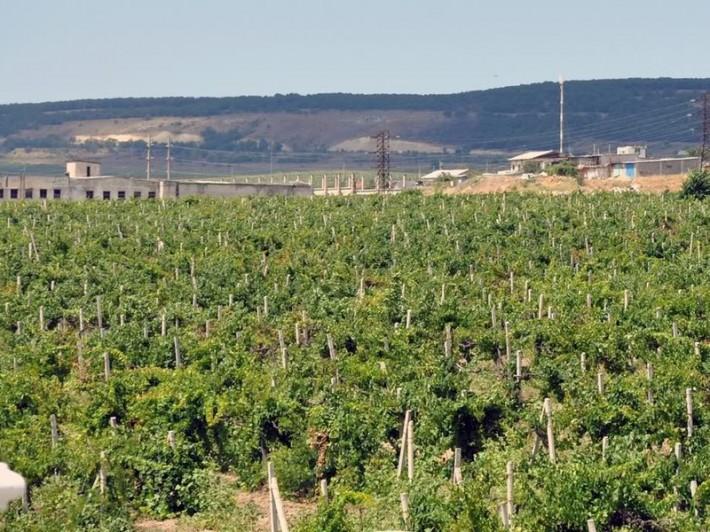 Поля агрофирмы Золотая Балка в Балаклаве