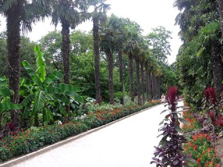 Аллея в Никитинском саду