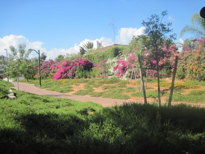 Утопающие в цветах дома – обычная картина из жизни в Раанане