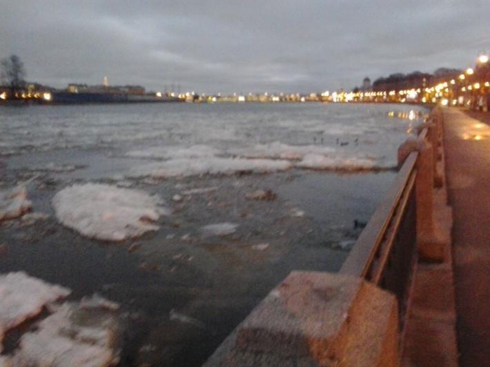 Набережная Макарова в декабре 2014 года, среди льдин плавают утки. г. Санкт-Петербург