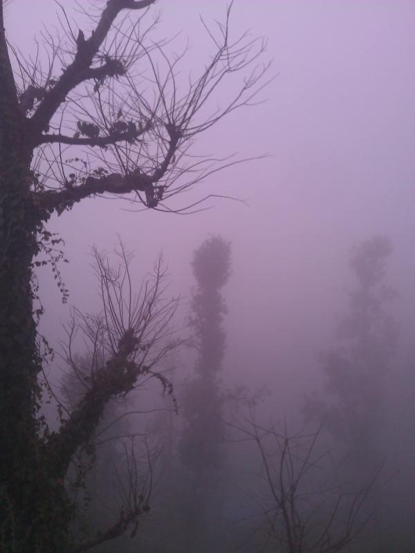 Сезон дождей, туман