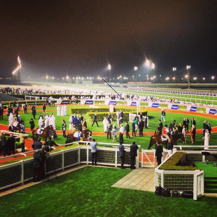 В ОАЭ конный спорт - является самым популярным, и по совместительству - моим любимым