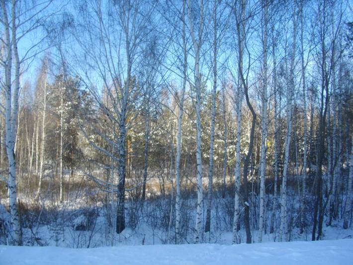 Сказочный лес у высоток