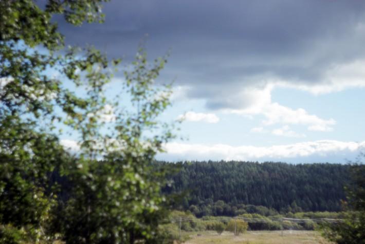 Вот собственно и он - ухтинский лес над речкой