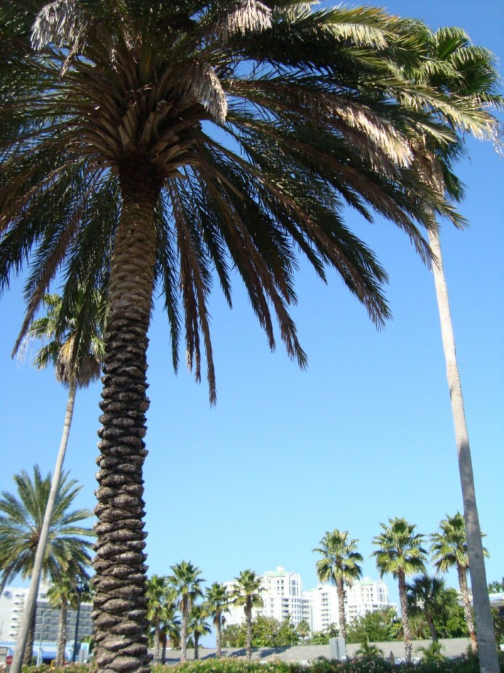 Пальмы везде