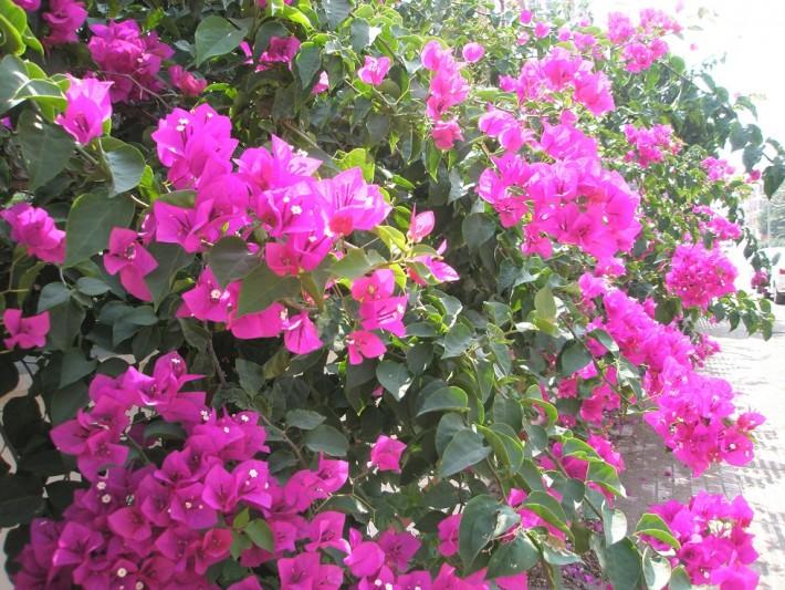 Природа Анталии в конце июля