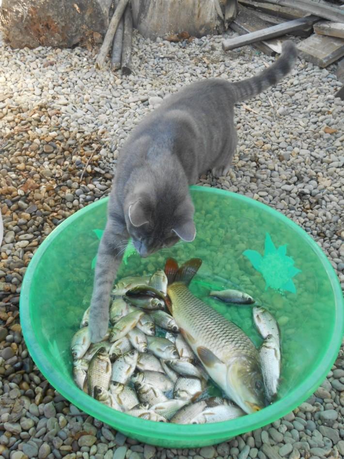 Рыбка из местных прудов