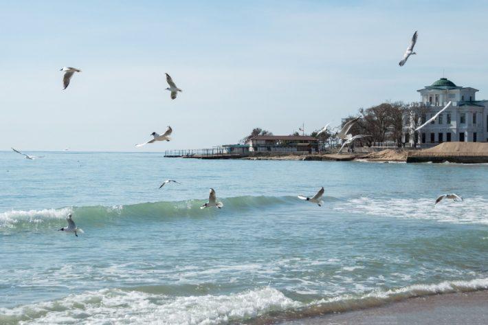Евпатория: чайки над морем