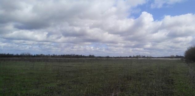 Типичный участок в прусском поле