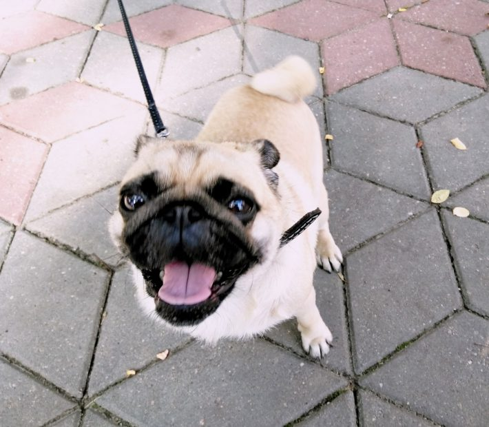 В Бресте собак много