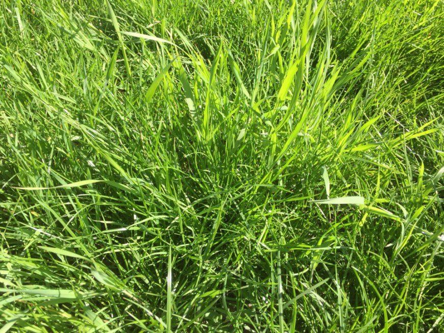 Зелёная трава 15 апреля