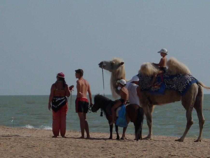 Азовское море (где-то в районе Должанки)