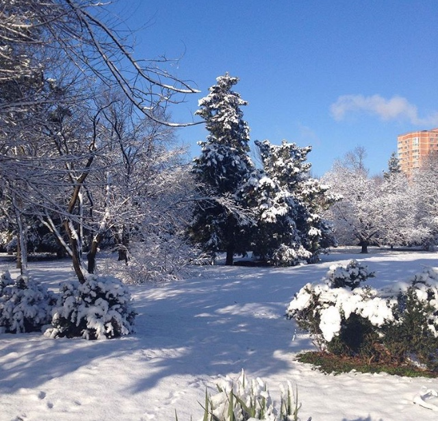 Зимний день в Чистяковской роще