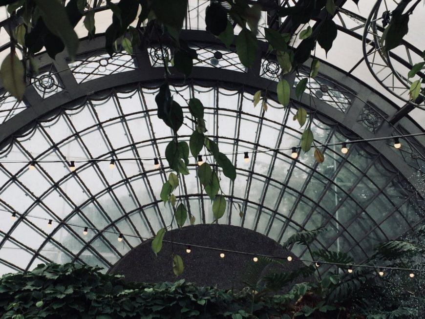 Оранжерея в Таврическом саду