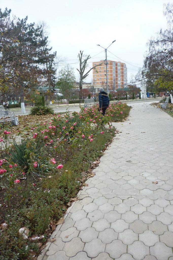 Парк в начале декабря, цветут цветы