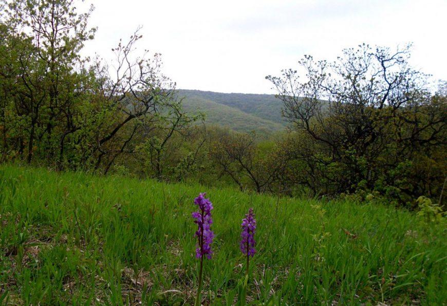 Гуляю по лесам Анапского и Новороссийского районов