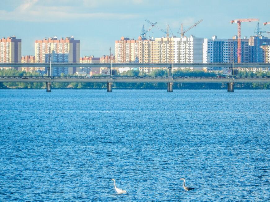 Серые цапли на Воронежском водохранилище. Май 2020