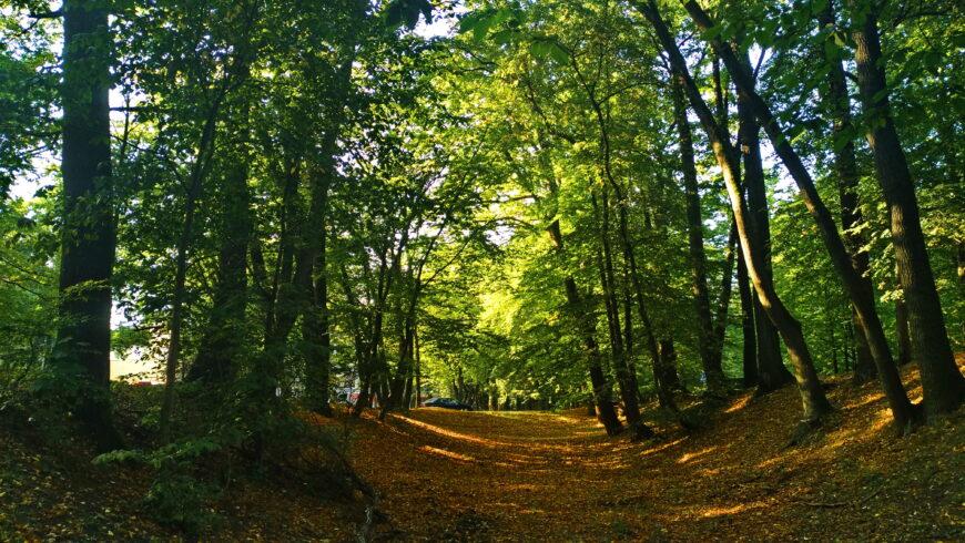 Парк на ул. Яналова