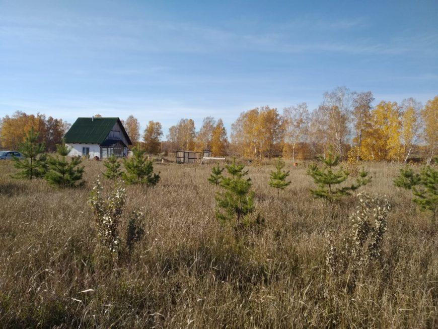 Примерно так выглядело моё жильё в родовом поместье: небольшой домик и гектар земли, который нужно самостоятельно осваивать