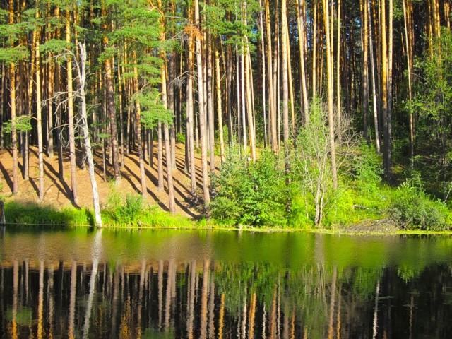 Живописно раскинувшееся озеро в глубине бора